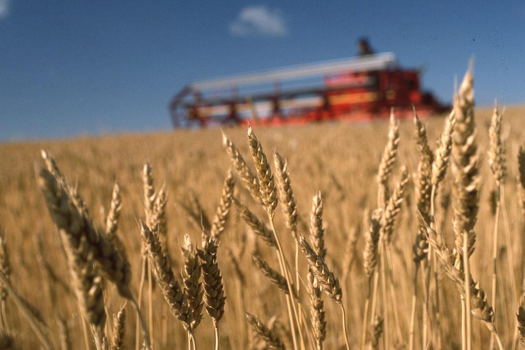 Wheat in field at harvest and combine near Jamestown North Dakota