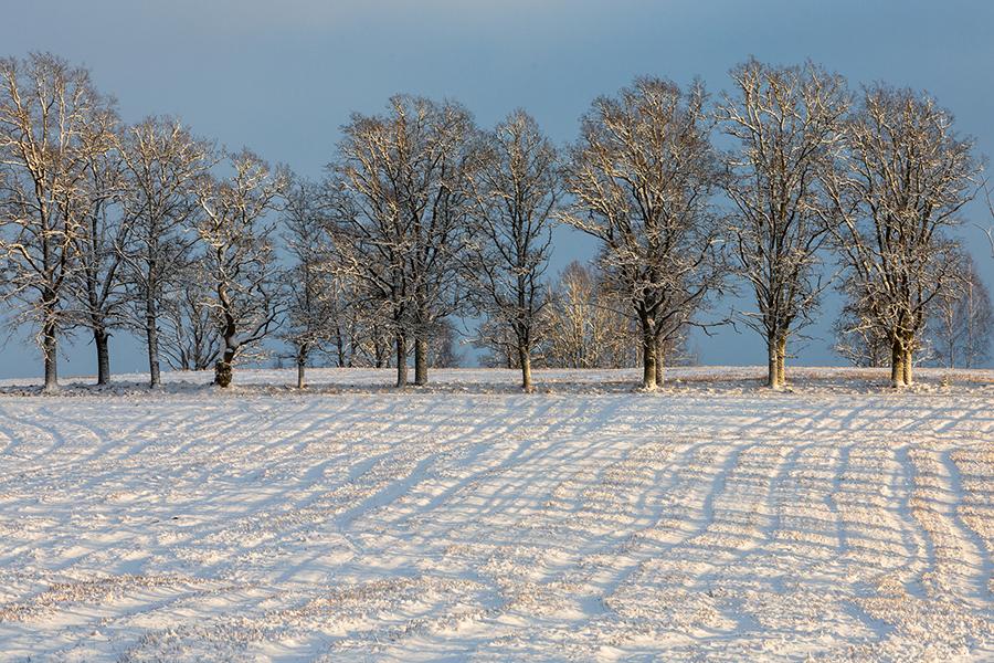 a tilled field in winter